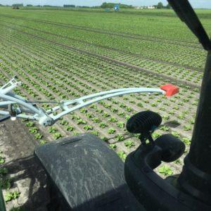 Crop sensor lettuce plants