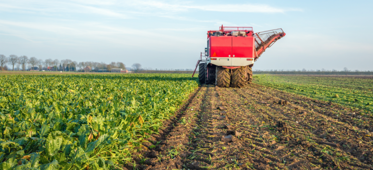 Sugar beet fertiliser